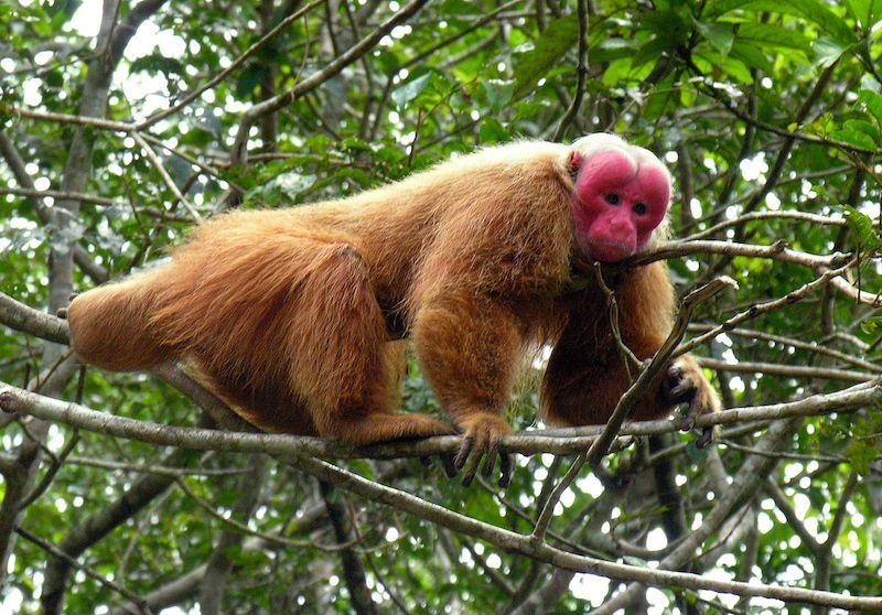 Endangered Animals of the Amazon Rainforest Rainforest
