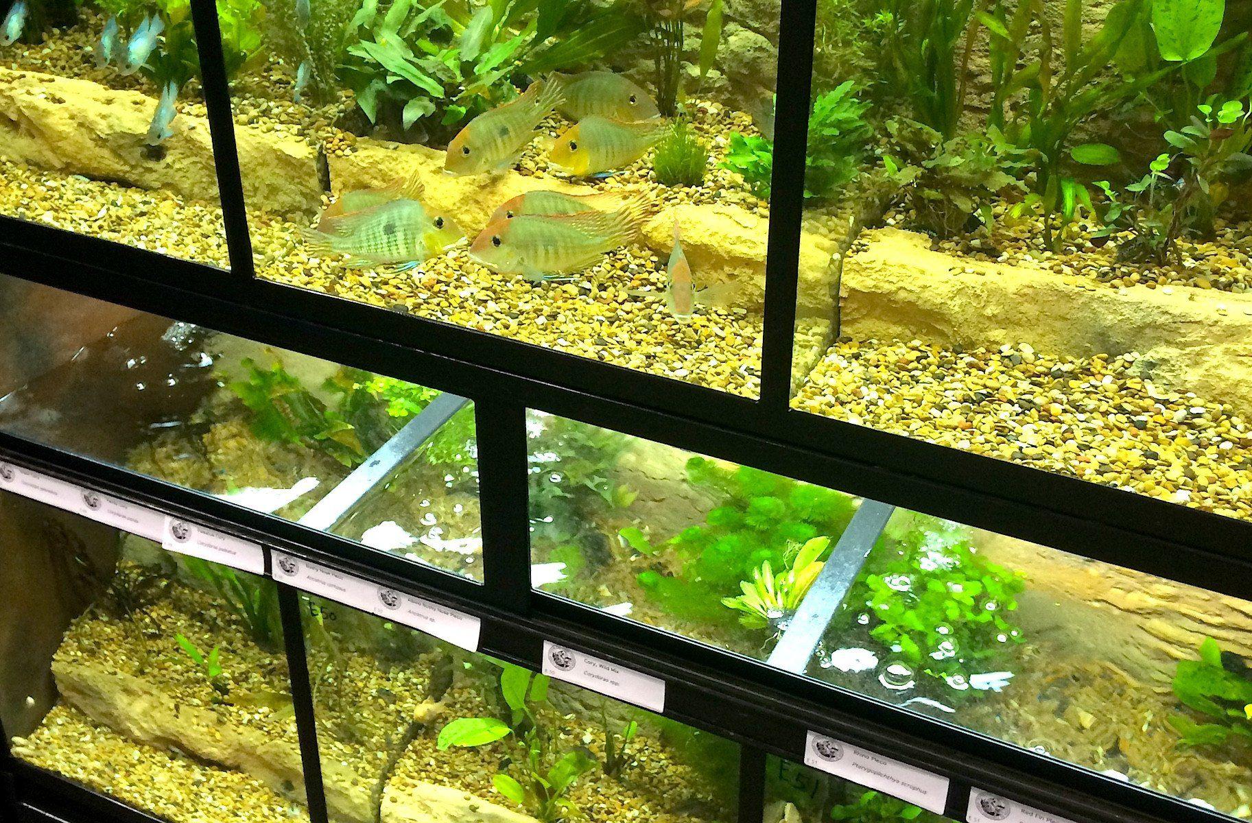 Freshwater Fish Enclosures \
