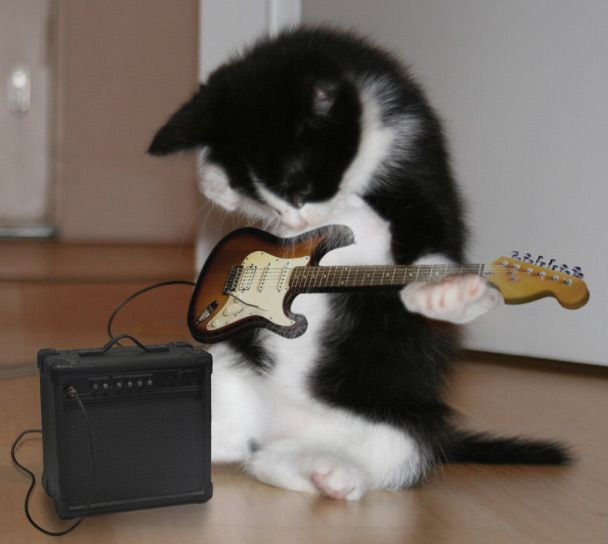 Rock and roll kitty.