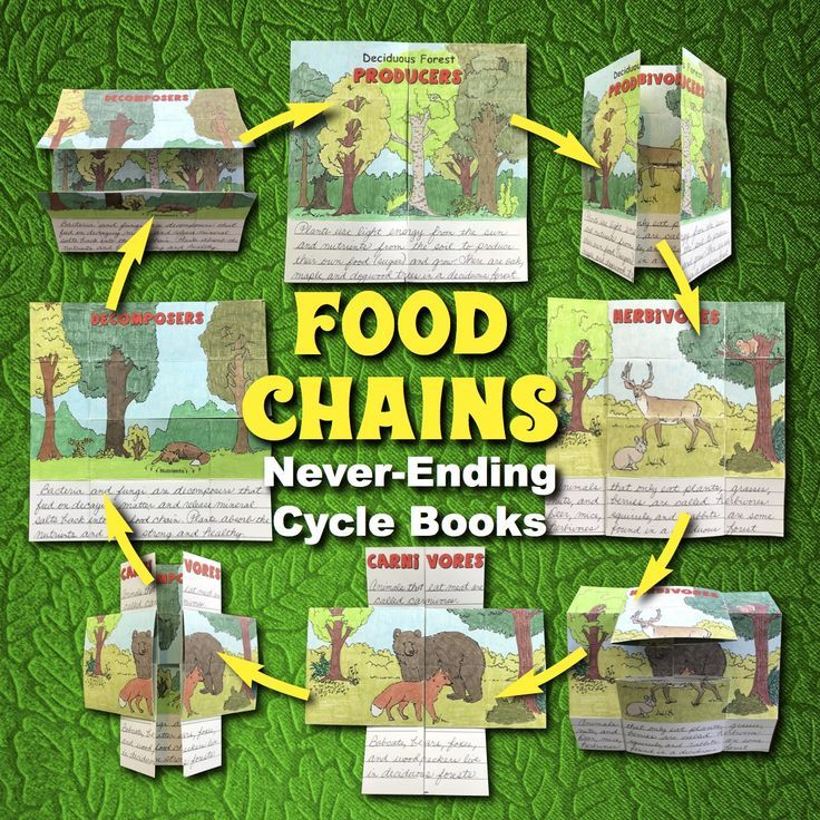 Biomes Project / Food Chains Activity — 6 Cycle Books of