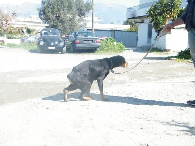 08 3 13 Sina This Picture Shows Just How Staved She Really Is Www Artemis Crete Rescue Com Species Extinction Pets Animals