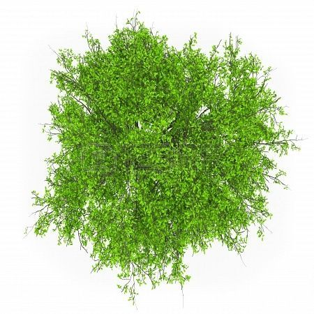 trees top view - Google Search | ref | plant cutouts ...