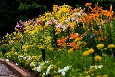 Garden Ideas For Minnesota lily garden | mn landscape arboretum | pinterest | lily garden