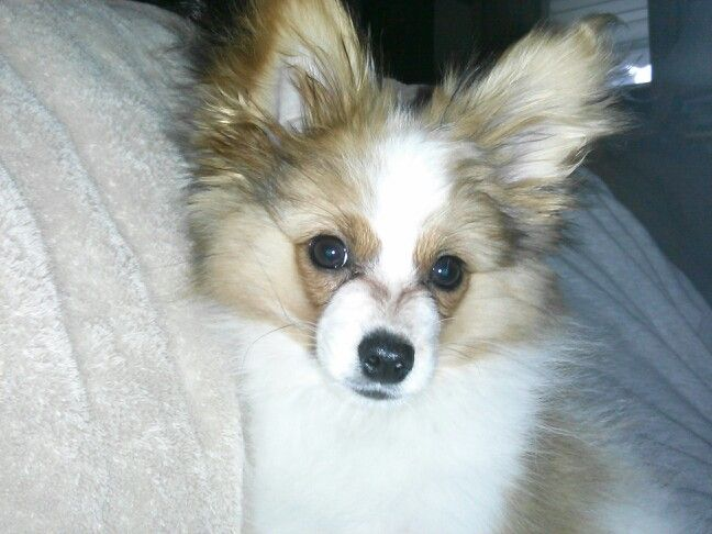 My boy Marvel at 16 weeks old.
