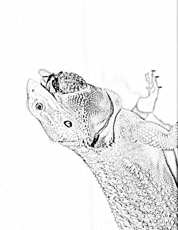 Bearded Dragon Adult Coloring / Shading Book by BeardieBigUps ...