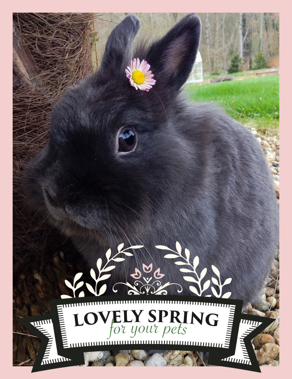 "Zolux joins Yummypets and offers you many prizes to win! For a chance to win, it's very simple, follow the steps below: Follow Zolux on Pinterest: ymp.io/u/Dlm - Follow Yummypets on Pinterest: ymp.io/u/tvb - Follow the board ""Lovely spring for your pets !"": ymp.io/u/sei - Repin the products that you would like to win - Results on April 13th 2015. GOOD LUCK! #game #pets #rodent #bunny #petsupply #gift #pinterest #yummypets #zolux"