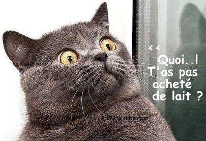 Photos Animaux Droles Avec Legendes Humoristiques Humour Animaux Animaux Droles Blague Animaux