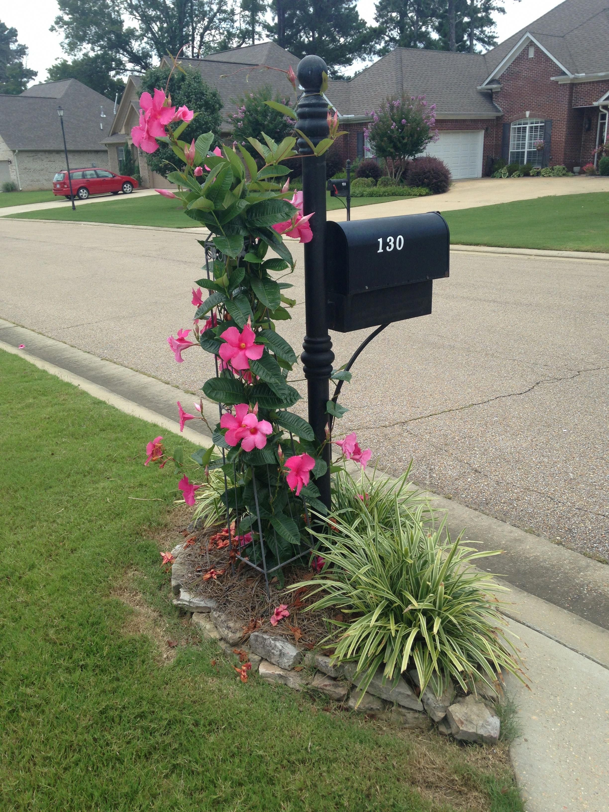 Pin By Callie Skipper On Gardening For This Dummy Things I Wish I Knew How To Do Mailbox Landscaping Mailbox Garden Landscape Design