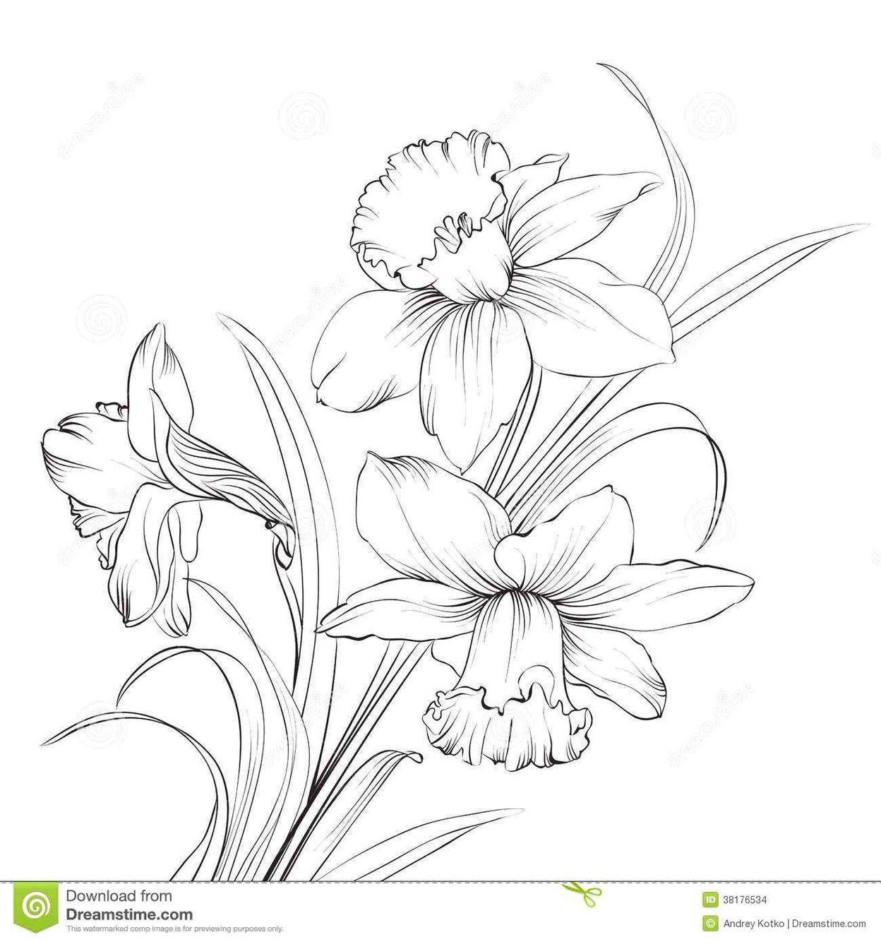 Daffodil W Kookaburra Mandala Daffodil Tattoo Flower Drawing Birth Flower Tattoos