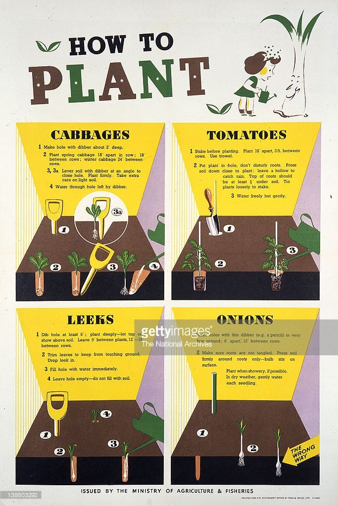 how to plant poster wwii planting vegetables vegetable garden victory garden leaflets