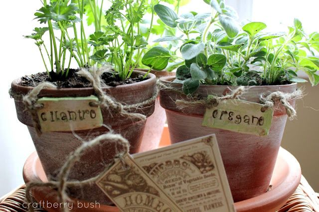 Craftberry Bush: A little herb garden...