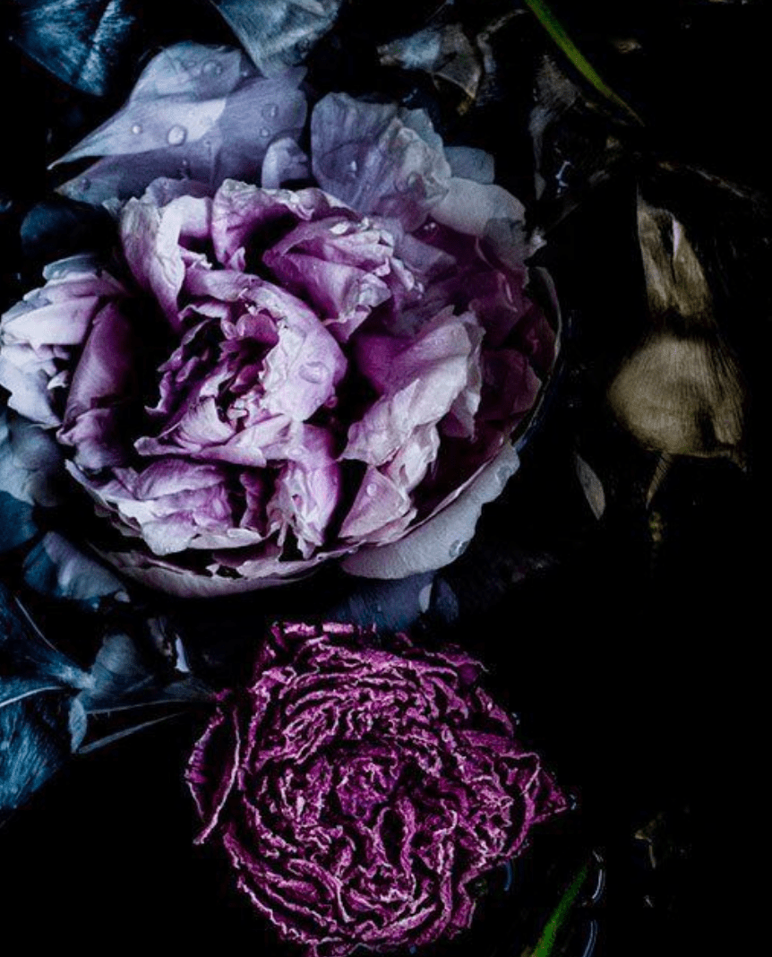 Purple in color magic communicates royalty and glamor