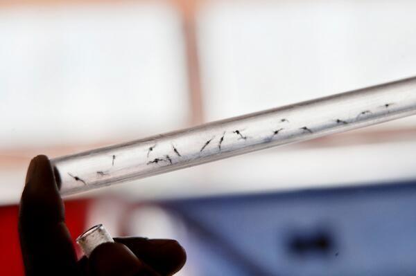#Malaria Cada 2 minutos muere un niño por malaria. ¿Cómo algo tan pequeño causa tanto sufrimiento? #StopMalaria