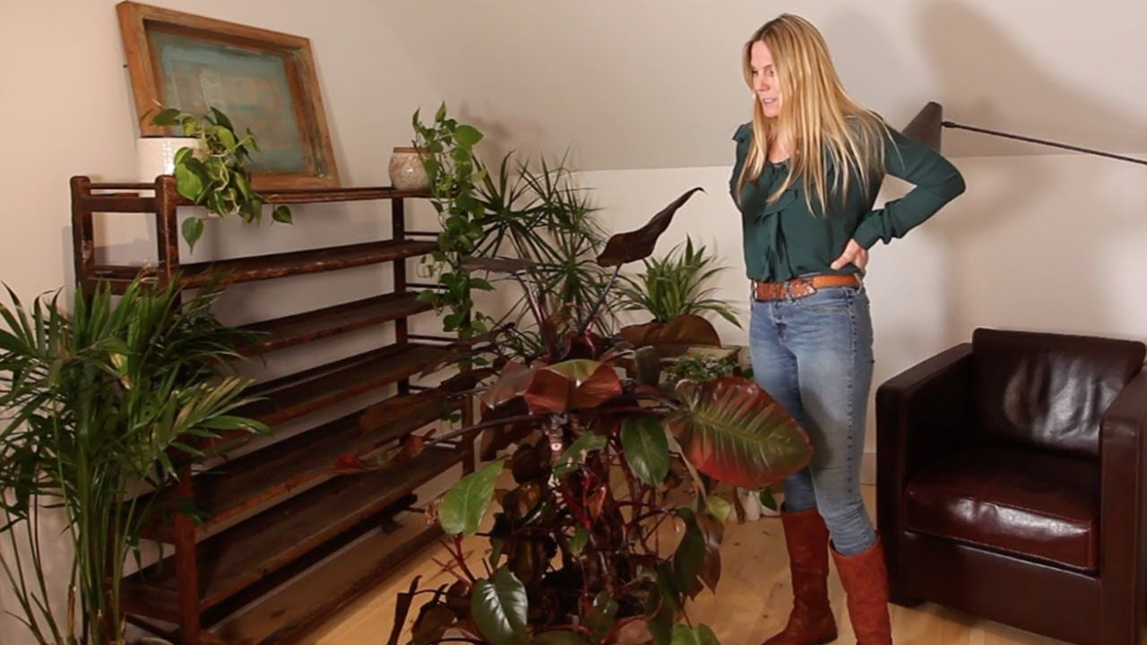 LOW LIGHT PLANTS FOR WINDOWLESS ROOMS YouTube (With