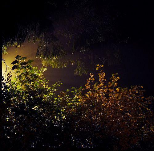 Notturno autunnale