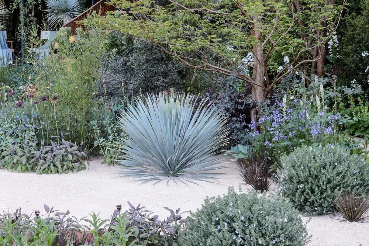 Best plants for a gravel garden is part of Gravel garden, Dry garden, Plants, Cool plants, Pagoda garden, Yucca rostrata - Gravel gardens are characterised by their sunny, freedraining conditions  We pick plants that will thrive there