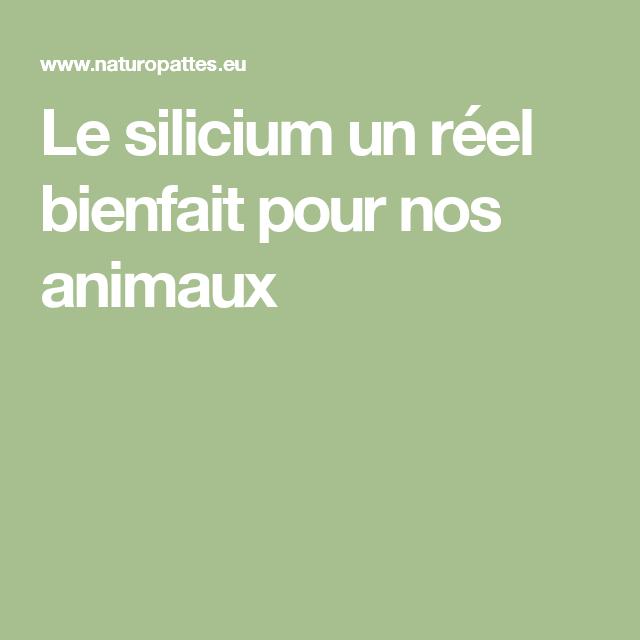 Comprimé Anti Puce Et Tique Pour Chien Le Silicium Un Reel Bienfait Pour Nos Animaux Le Silicium Animaux Silicium