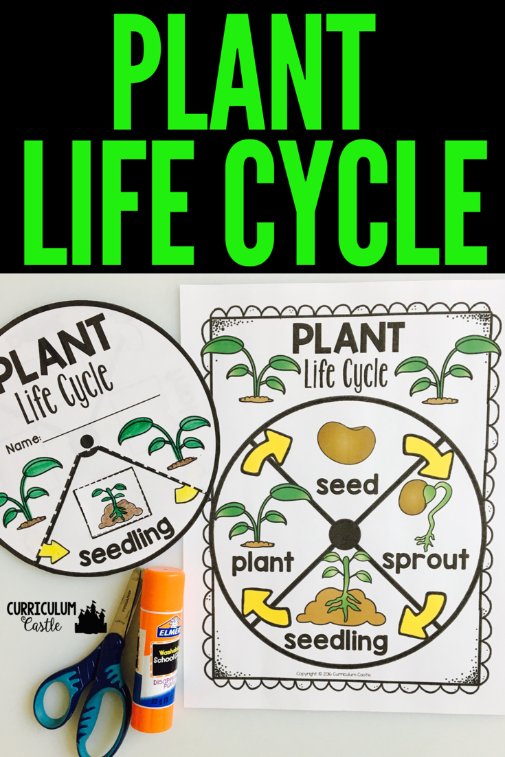 Life Cycle Interactive Wheels For The Year Life Cycles Plant Life Cycle Plant Lessons [ 1102 x 735 Pixel ]