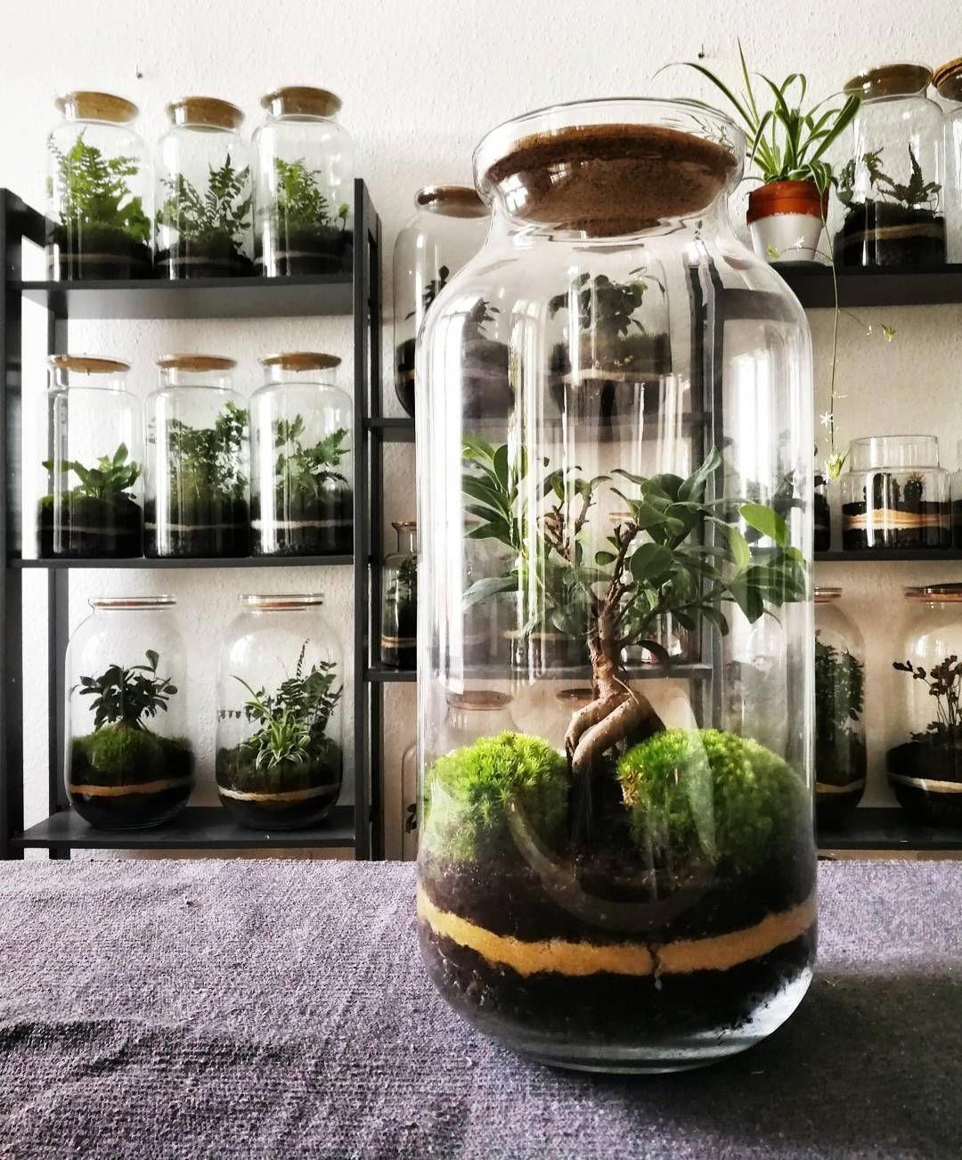 Polubienia 431 komentarze 16  capsulegardens na Instagramie Newly made bonsai although is not really finished yet Terrarium Diy Terrariums Small Terrarium Bottle Terrariu...