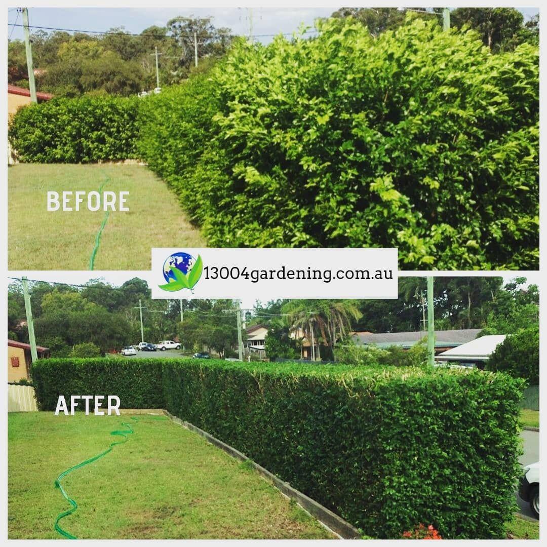 Fresh Hedge Trimming Before And After 13004gardening Weekendsareforfamilyandfun Garden Gardens Gardeners Gardenl Garden Lovers Hedges Ipswich