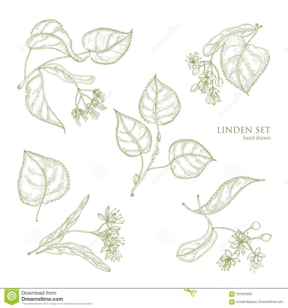 Dschungel Blätter Malvorlagen