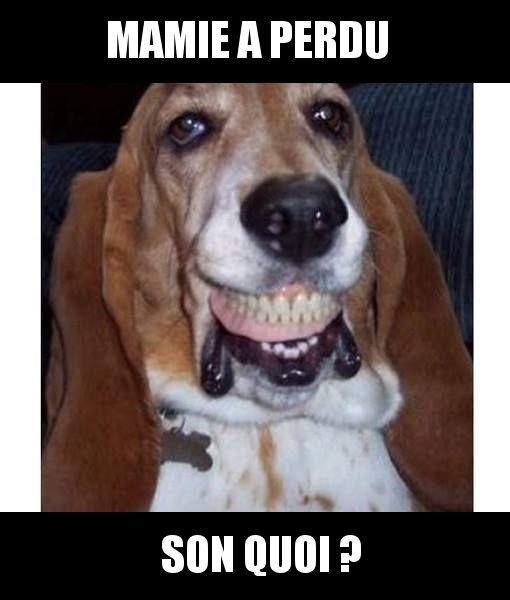 Voleur de dentier | Humour chiens, Animaux amusants, Photo drole animaux