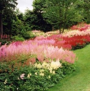 astilbes in the clay soil garden of holehird windemere caroline benedict smith garden design cheshire - Garden Design Cheshire