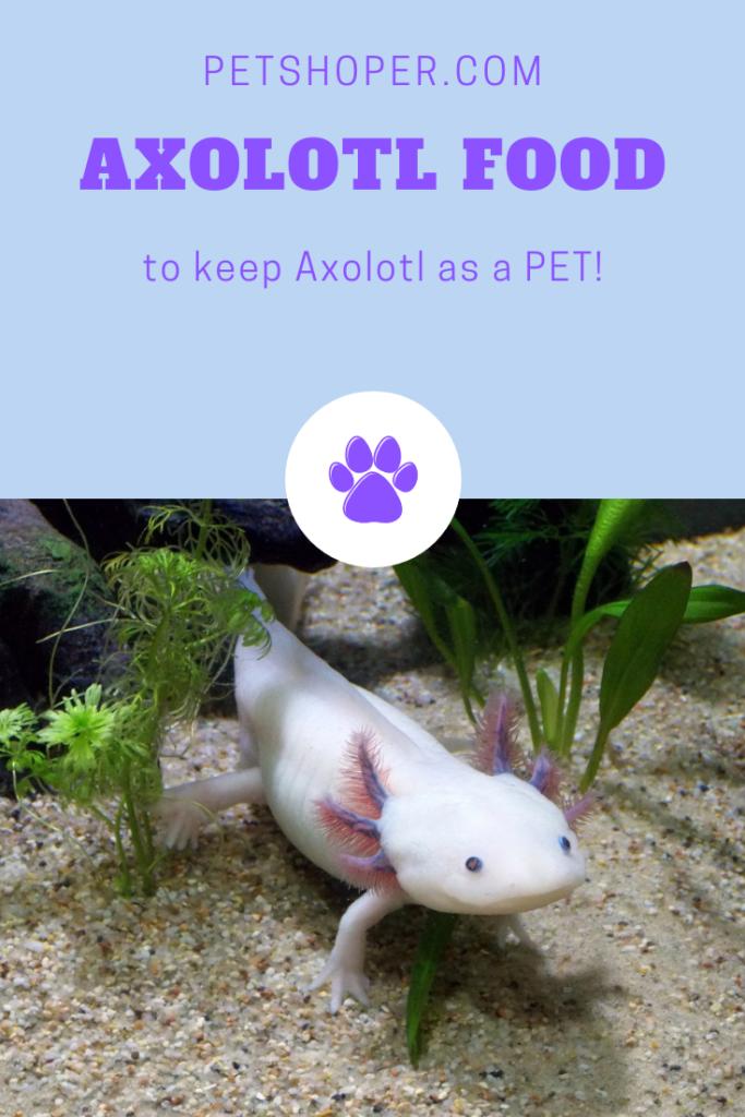 Axolotl As Pets Descriptive Guide On How To Keep Care Axolotl
