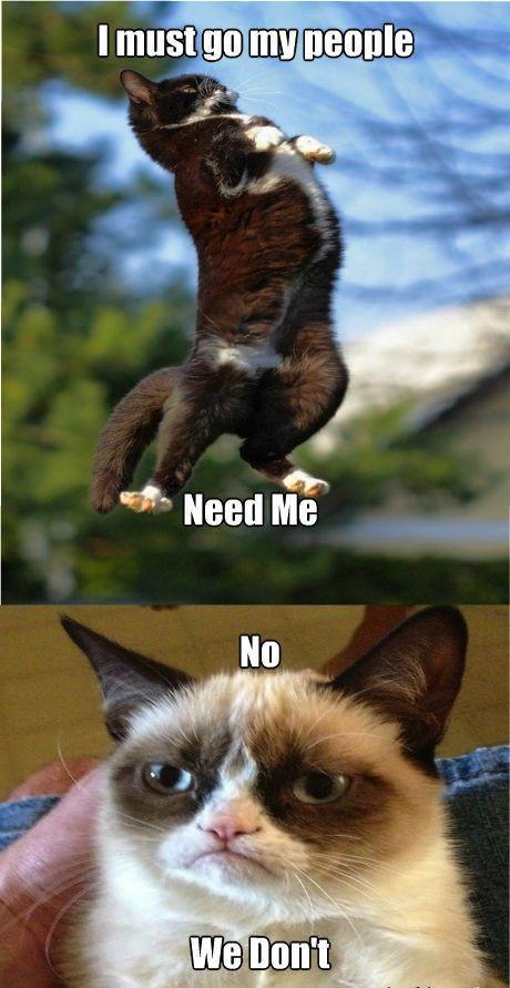 Memes Humor For More Lol Cats And Funny Memes Visit Www Bestfunnyjokes4u Com Lol Best Funny Cartoon Joke 2 Grumpy Cat Funny Grumpy Cat Memes Grumpy Cat Meme