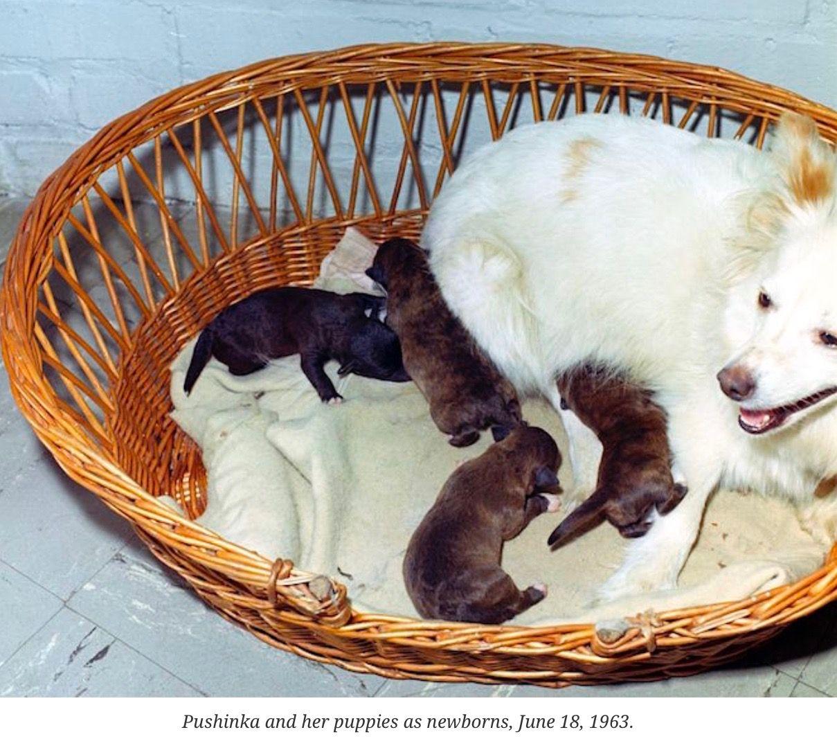 Kennedy Pets Pets, Dogs