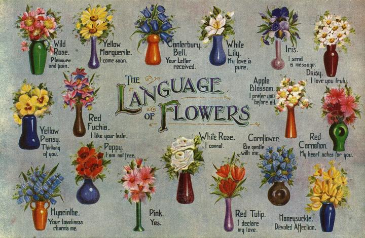 Flower Meanings The Language Of Flowers In 2020 Flower Meanings Flower Chart Flower Symbol