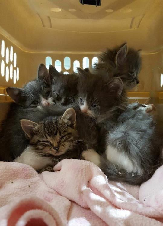 A Couple Was Shocked To Find A Box Of Kittens Abandoned In The Back Of Their Truck When They Returned From Shopping The Kittens Kittens Cats Benadryl For Cats