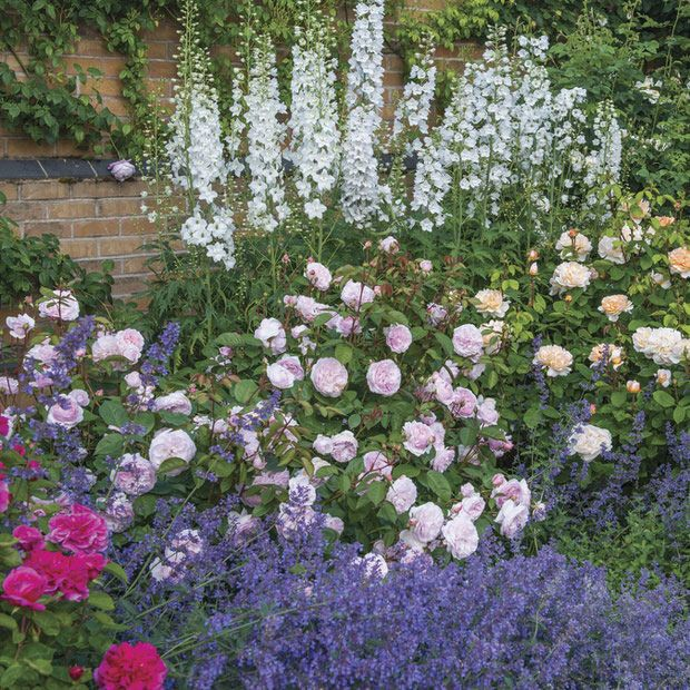 Cottage Garden Plants for American Gardens | Cottage garden plants ...