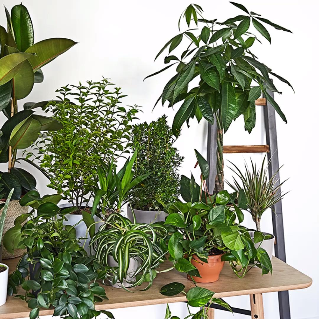 Guia Westwing: Urban Jungle #indoorgarden