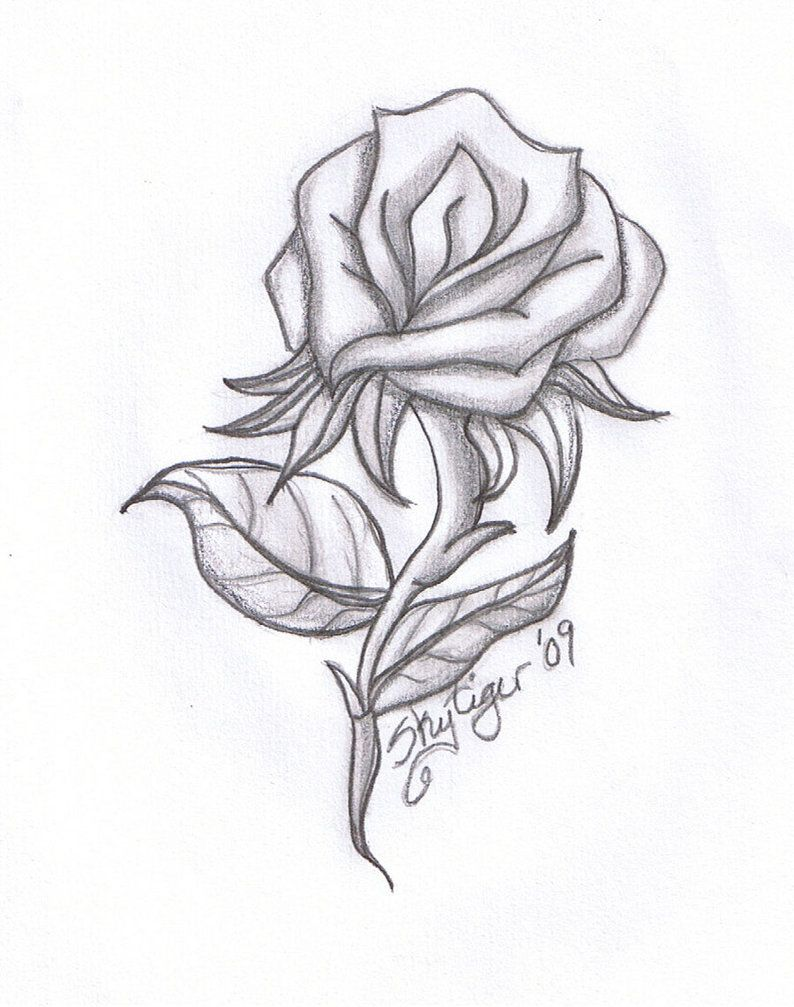Rose Drawings | Rose pencil drawing by Skytiger on ...