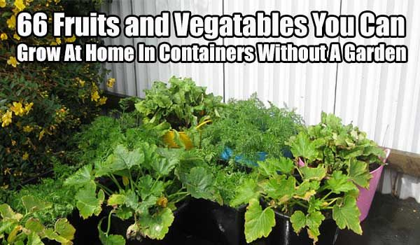 66 Fruits And Vegetables You Can Grow At Home In
