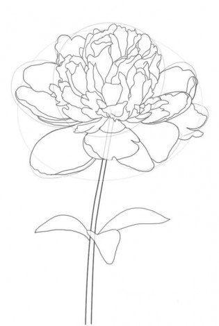 pfingstrose zeichnen blumen zeichnung, pfingstrose zeichnen - blumen zeichnung-dekoking-com-1   printable, Design ideen