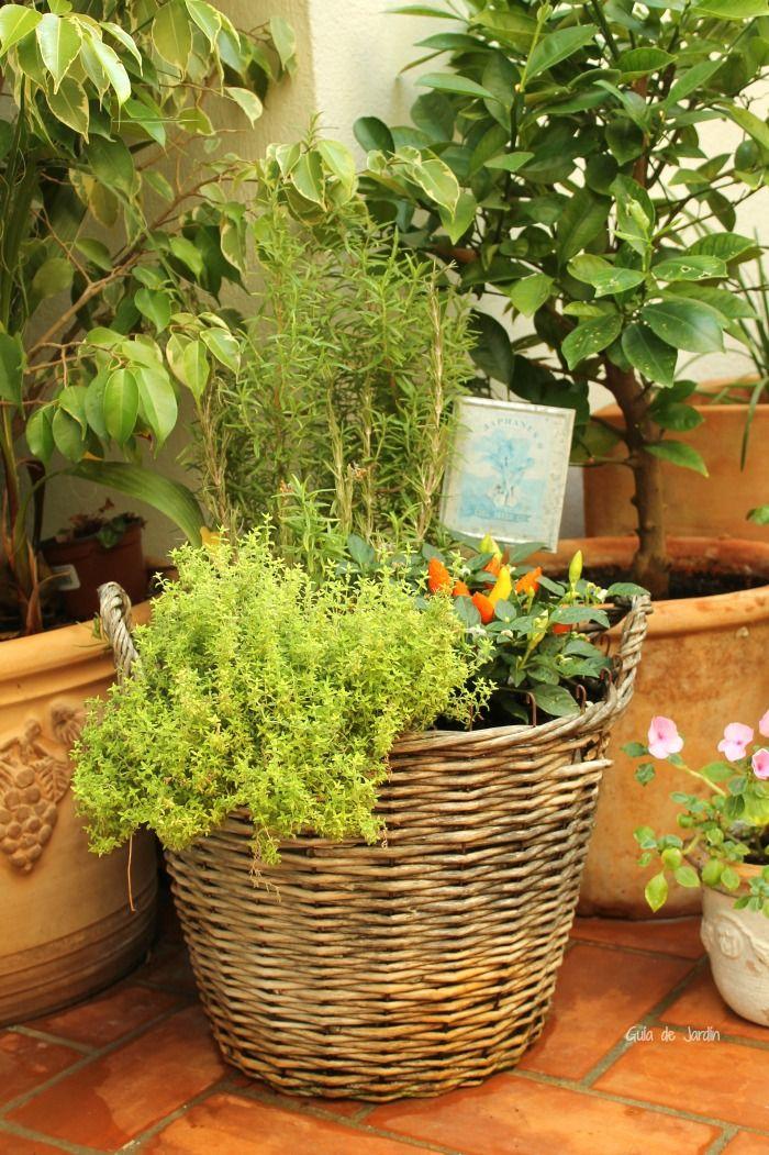 C mo crear un jard n en macetas guia de jardin blog de - Como cuidar las hortensias en maceta ...