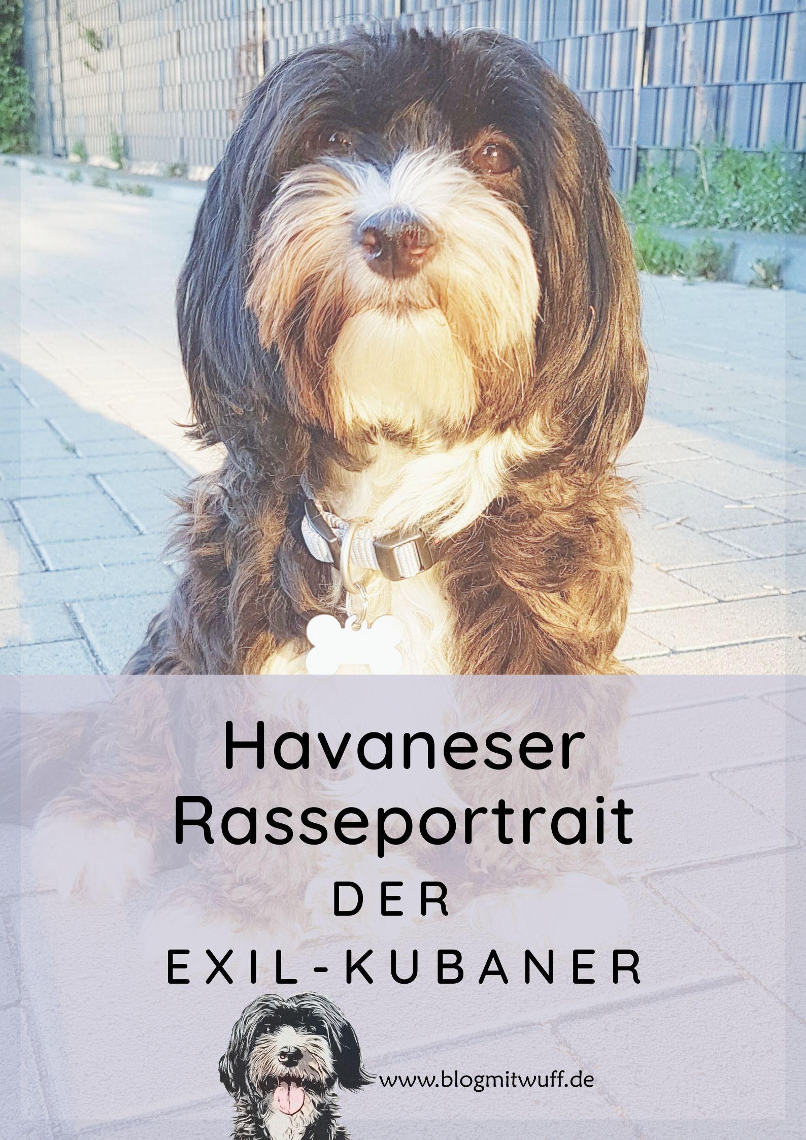 Tiere Bild Von Jaya Havaneser Havaneser Hund Hunde