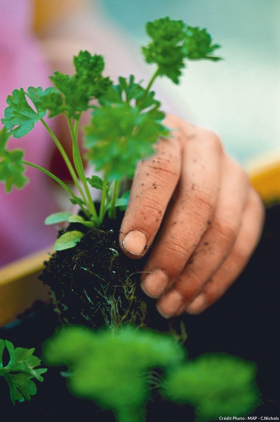 Planter du persil en pot | Planter du persil, Jardin de ...