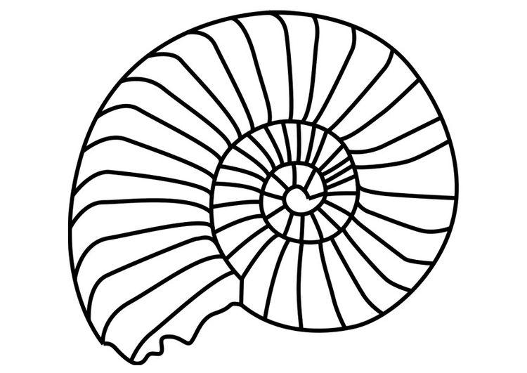 Malvorlage Ammonit Weichtier Ausmalbild 27190 Kunstproduktion Ausmalen Ausmalbilder