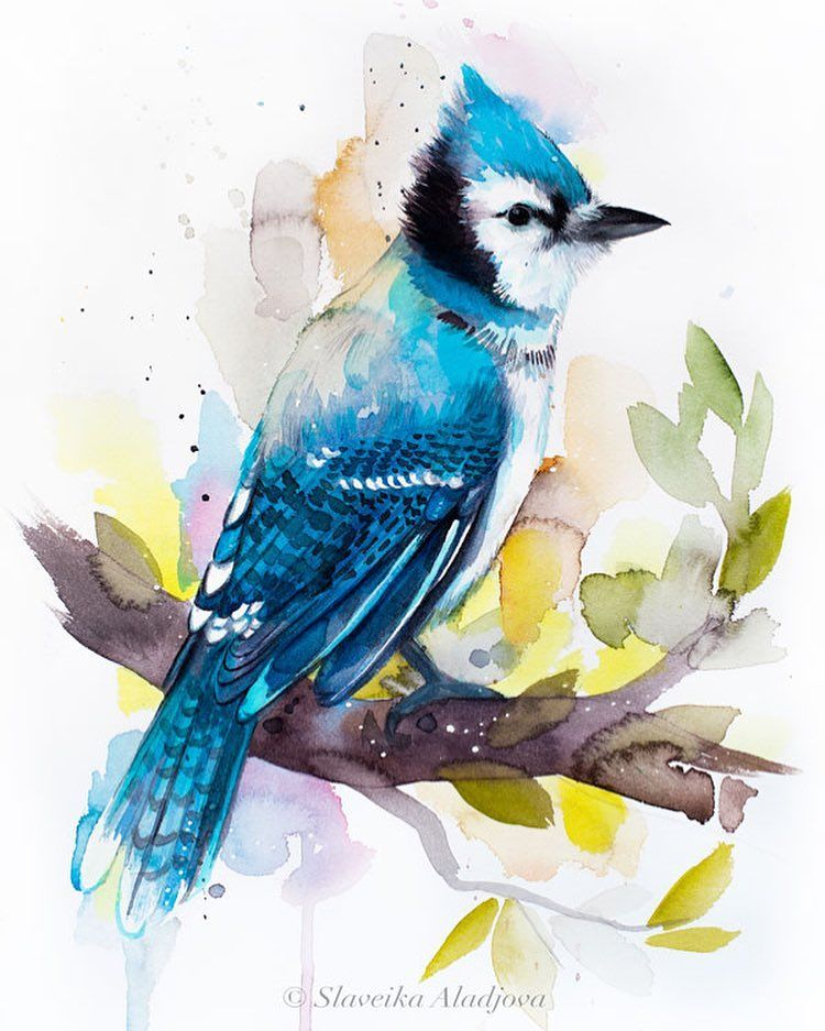 Blue Jay Blue Jay Bird Artists Rescue