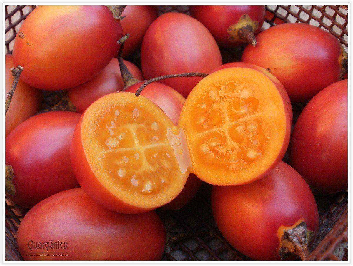 tree tomatoe