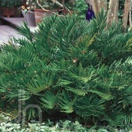 Home Depot Garden Club Plant Search Neem Oil For Hair Neem Oil Mosquito Repelling Plants