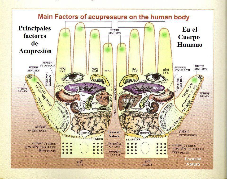Acupresion: Mapa para acupresion en manos muy grafico. | El cuerpo ...