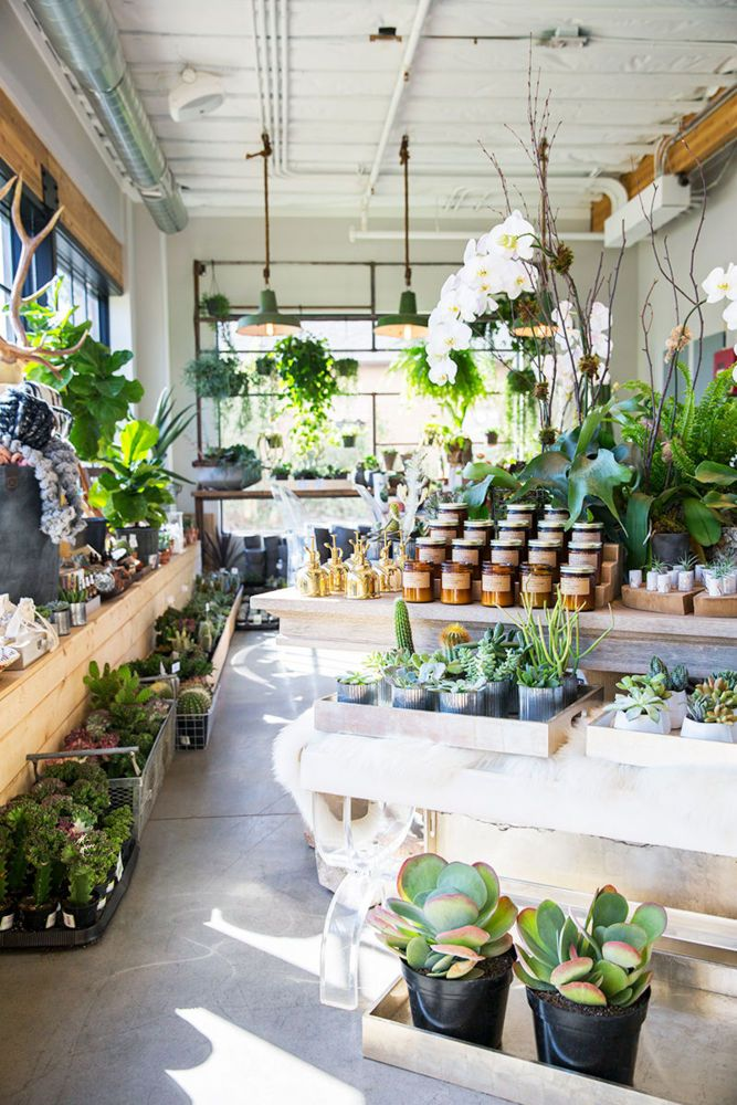 Pin by Ed Roberts on Garden Flower shop interiors