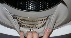 comment enlever les moisissures dangereuses et les odeurs d sagr ables de votre machine laver. Black Bedroom Furniture Sets. Home Design Ideas