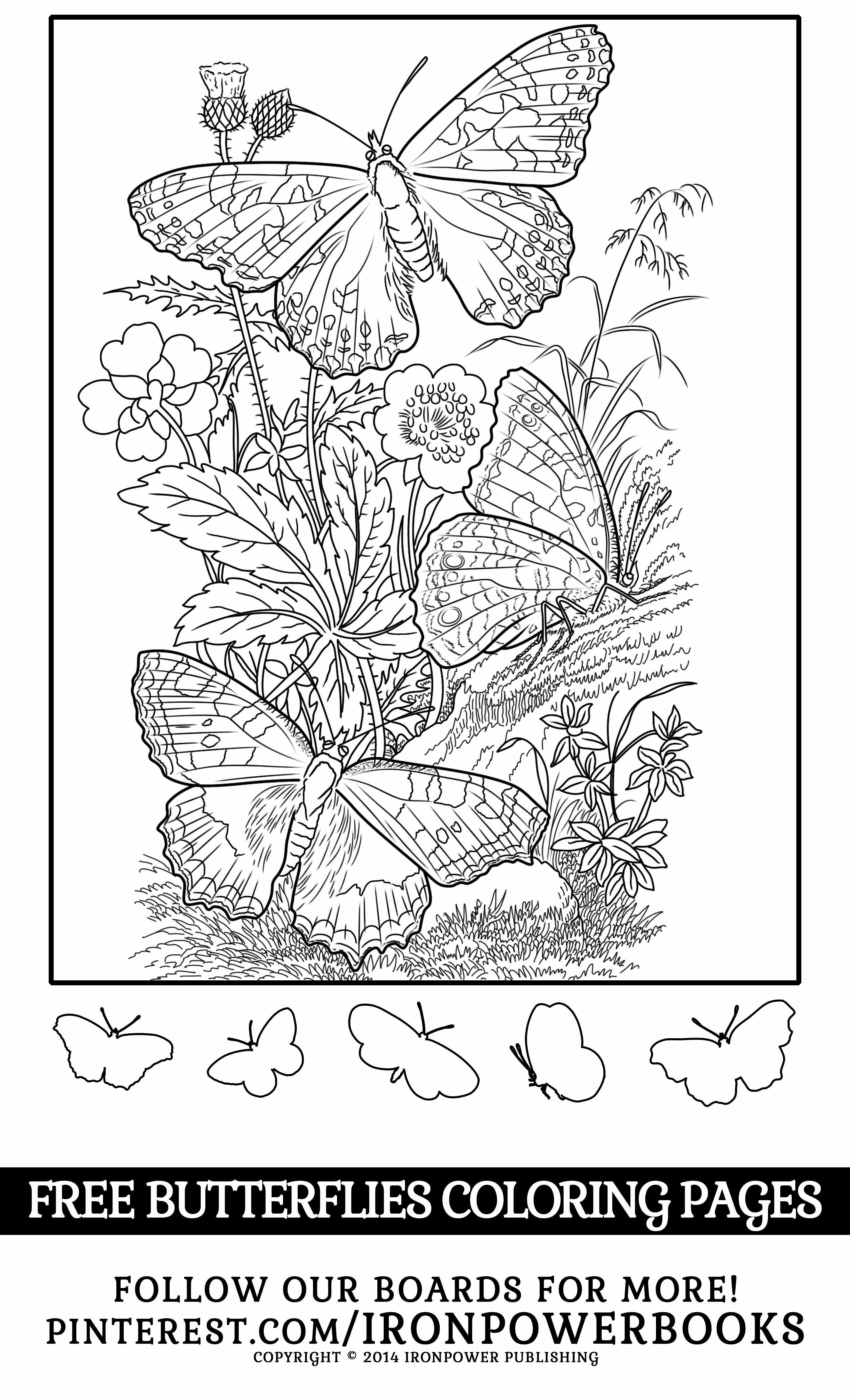 Free Butterfly Coloring Pages For Girls Please Use Freely For Personal Non Commercial Use Vi Butterfly Coloring Page Detailed Coloring Pages Coloring Pages [ 4200 x 2550 Pixel ]