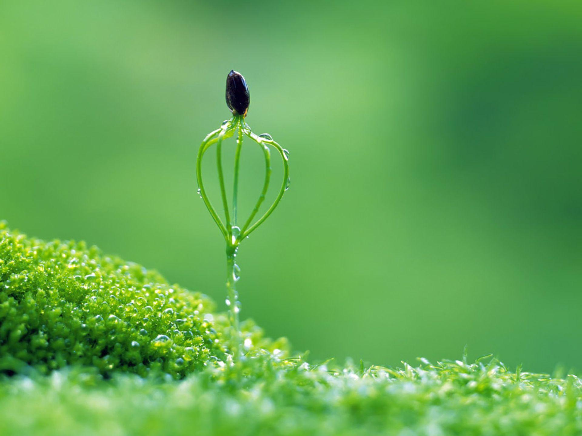 Macro Flower Nature Grass Green Photo Wallpaper Hd Desktop Mobile