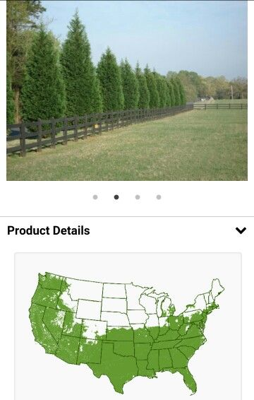 Leyland Cypress Fast growing trees for Zone 11: http://www.fast-growing-trees.com/Zone11.htm